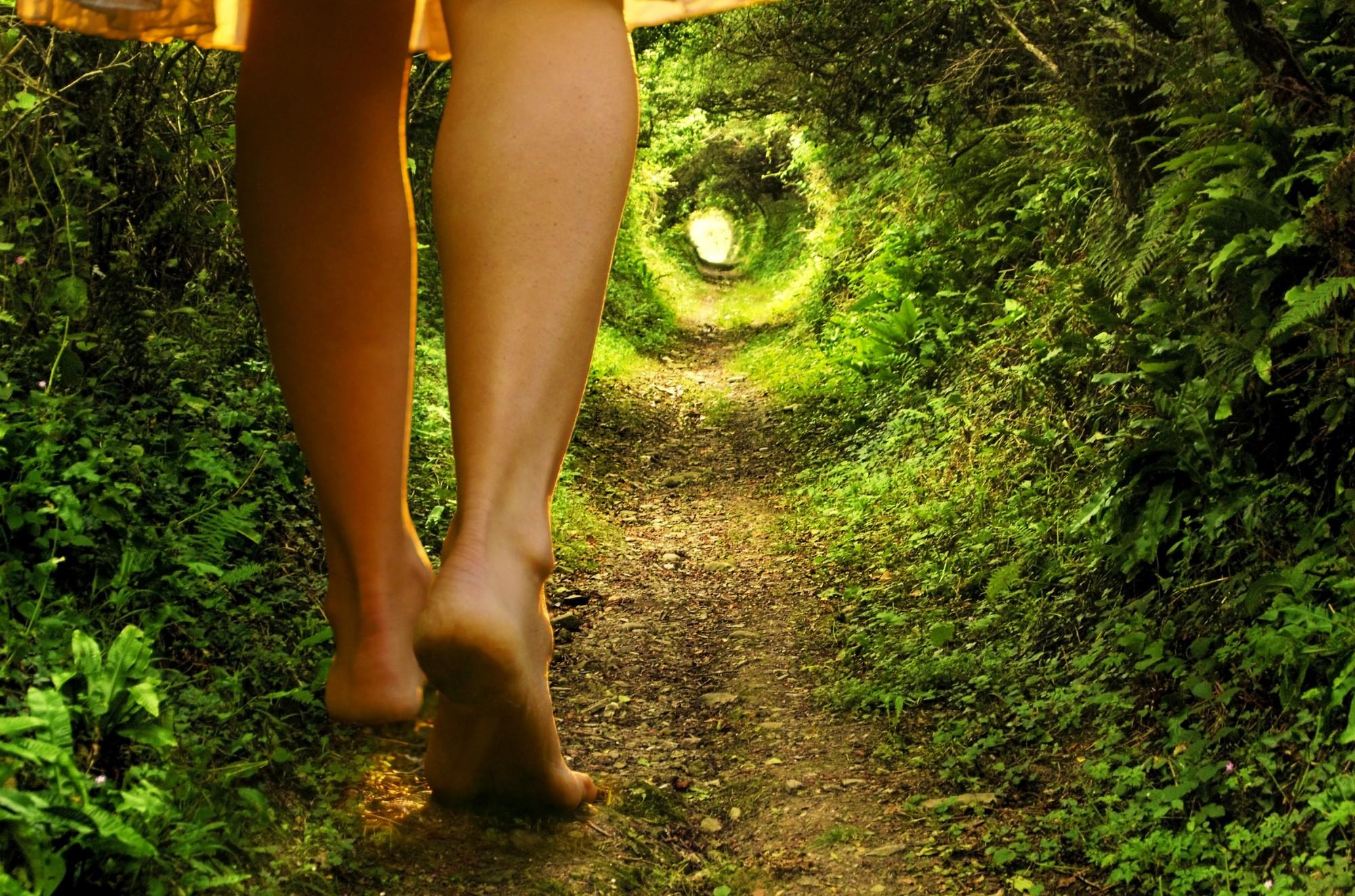 tunnel dans foret verte